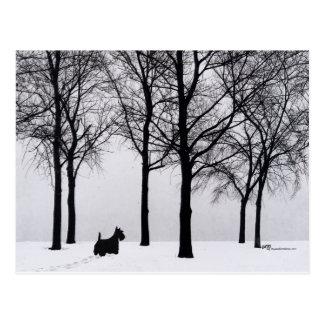 Escocés en las maderas Nevado Tarjetas Postales