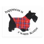 Escocés en suéter rojo y azul de la tela escocesa postal