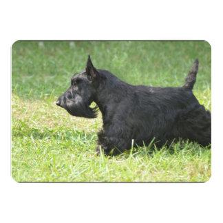 Escocés lindo Terrier Comunicados Personalizados
