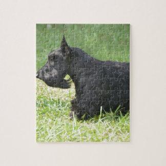 Escocés lindo Terrier Rompecabeza Con Fotos