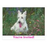Escocés Terrier de Wheaton Postales