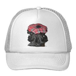 Escocés Terrier en un Tam-o-Shanter Gorras