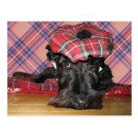 Escocés Terrier en un Tam-o-Shanter Postal
