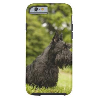 Escocés Terrier Funda De iPhone 6 Tough