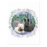Escocés y Westie en jardín acogedor Tarjetas Postales