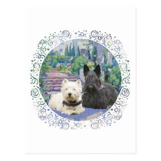 Escocés y Westie en jardín acogedor Postal