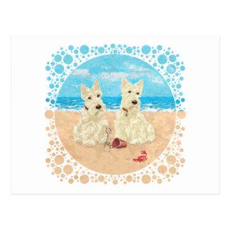 Escoceses de trigo en la playa tarjetas postales