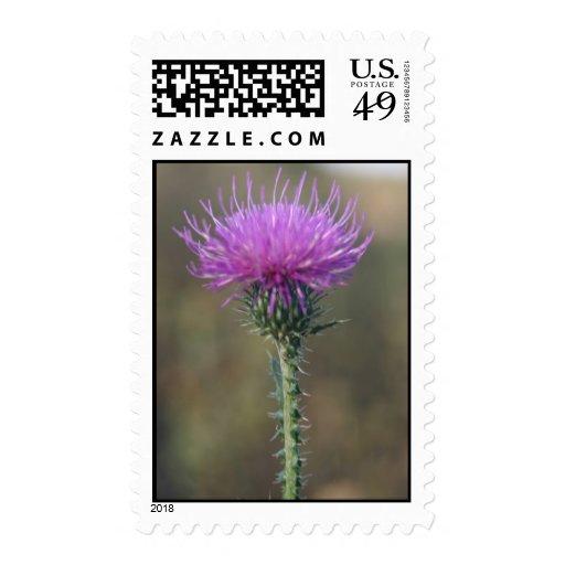 Escoja la flor púrpura en sellos de la espina