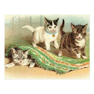 Escondite de los gatitos tarjetas postales