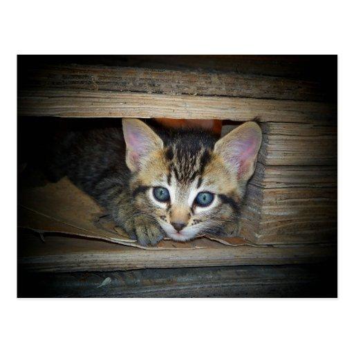 Escondite del gatito tarjeta postal