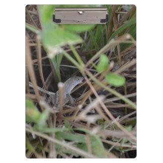 escondite del lagarto en animal del reptil de la