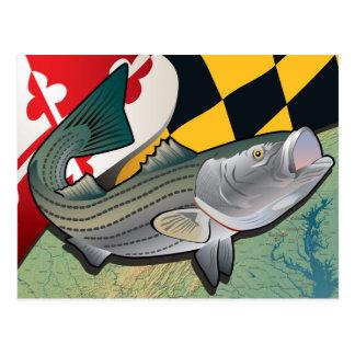 Escorpina del ciudadano de Maryland Tarjeta Postal