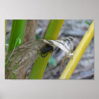 Escorpión negro en la planta impresiones