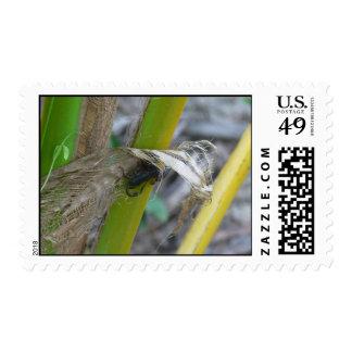 Escorpión negro en la planta sello