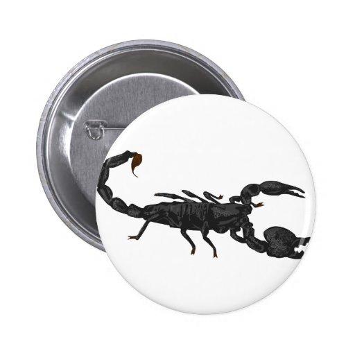 Escorpión negro imperial pins
