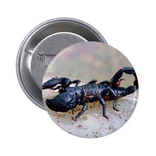Escorpión negro pin