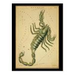 Escorpión Postales