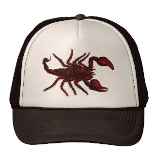 Escorpión rojo - gorra 2