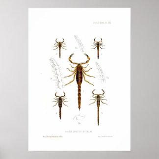 Escorpiones Póster
