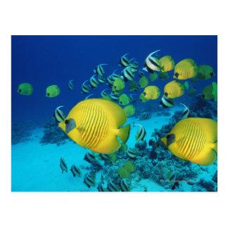 Escuela de la natación de los pescados de la postal