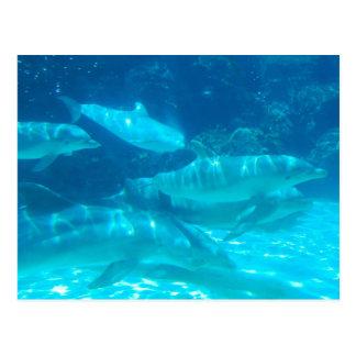 Escuela de la postal de los delfínes