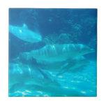 Escuela de la teja de los delfínes