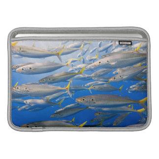 Escuela de los corredores de arco iris, mar de Cor Funda MacBook