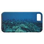 Escuela de los pescados 10 iPhone 5 Case-Mate fundas