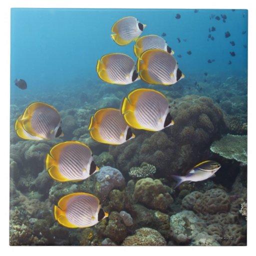 Escuela de los pescados 2 azulejo cuadrado grande