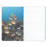 Escuela de los pescados 2 cuaderno