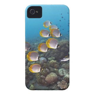 Escuela de los pescados 2 funda para iPhone 4