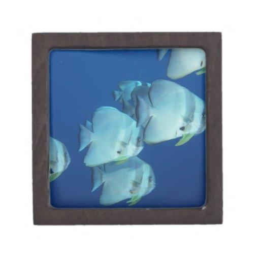 Escuela de los pescados 5 caja de regalo de calidad
