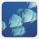 Escuela de los pescados 5 calcomanía cuadrada