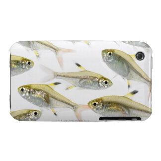 Escuela de los tetra pescados de la radiografía carcasa para iPhone 3