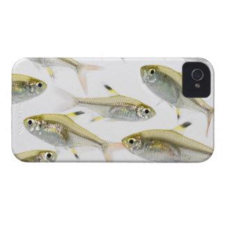 Escuela de los tetra pescados de la radiografía funda para iPhone 4 de Case-Mate