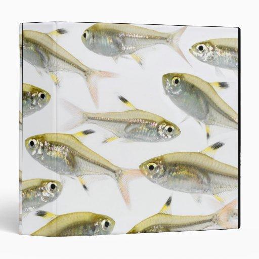 Escuela de los tetra pescados de la radiografía (P