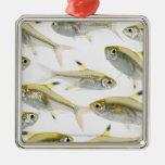 Escuela de los tetra pescados de la radiografía (P Ornamentos Para Reyes Magos