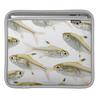 Escuela de los tetra pescados de la radiografía (P Fundas Para iPads