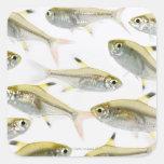Escuela de los tetra pescados de la radiografía (P Calcomanías Cuadradas Personalizadas