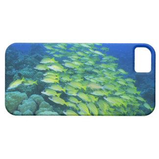 Escuela de mordedores bluelined natación funda para iPhone SE/5/5s