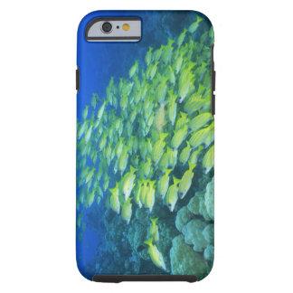 Escuela de mordedores bluelined natación funda resistente iPhone 6