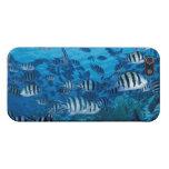 Escuela de pescados rayados iPhone 5 carcasa