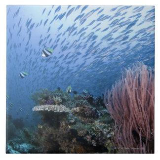 Escuela de pescados sobre el filón azulejo cuadrado grande