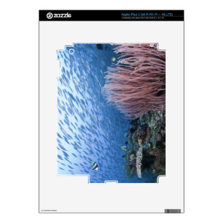 Escuela de pescados sobre el filón iPad 3 pegatinas skins