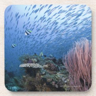 Escuela de pescados sobre el filón posavaso