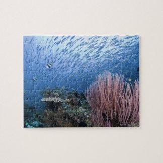 Escuela de pescados sobre el filón puzzle