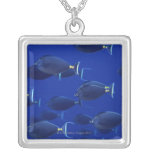 Escuela de unicornfish liso-dirigidos colgante cuadrado