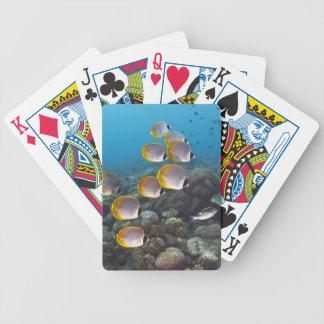 Escuela del angelfish barajas de cartas