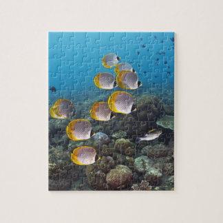 Escuela del angelfish rompecabeza