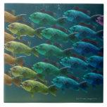 Escuela del bajo del Mar Negro en los colores del Azulejo Ceramica